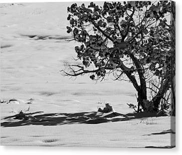 Canvas Print featuring the photograph Winter Juniper  by Eric Rundle