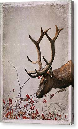 Winter King Canvas Print by Julie Magers Soulen