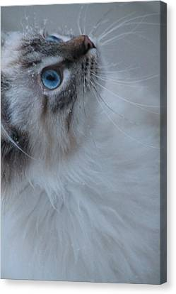 Winter Kitty Canvas Print