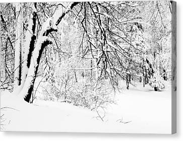 Winter Lace II Canvas Print by Jenny Rainbow