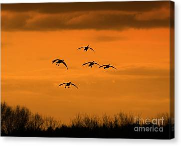Winter Landing No.2 Canvas Print by Neal Eslinger