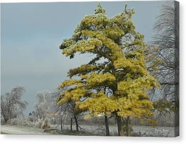 Canvas Print featuring the photograph Winter Landscape by Debra Martz