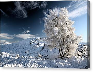 Winter Landscape Canvas Print by Grant Glendinning