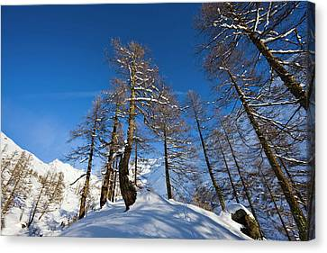 Winter Landscape With Larch Tree Forest Canvas Print by Martin Zwick