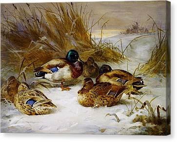 Winter Landscape With Mallard Canvas Print by Celestial Images