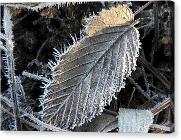 Winter Leaf Hoarfrost Canvas Print