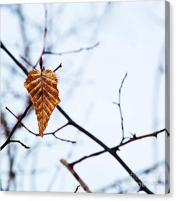 Canvas Print featuring the photograph Winter Leaf by Kennerth and Birgitta Kullman