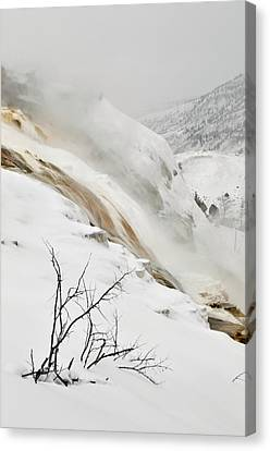 Winter Limbs Canvas Print by Bruce Gourley