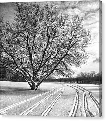 Winter Lines Canvas Print by Lauri Novak
