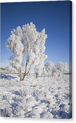 Winter Magic Canvas Print by Pat Speirs