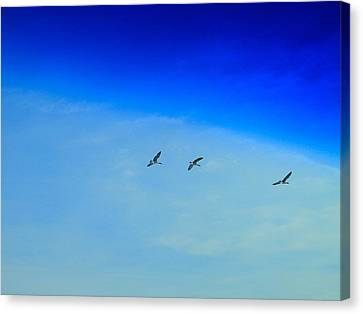 Winter Migration Canvas Print by Dan Sproul