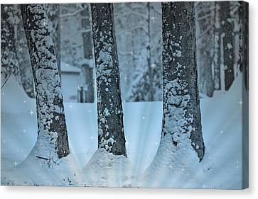 Winter Miracle Canvas Print by Trish Tritz