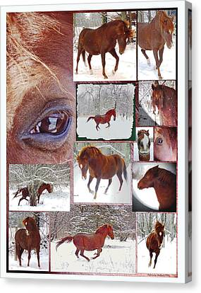 Winter Moments- With The Flashy Paso Fino Stallion Canvas Print