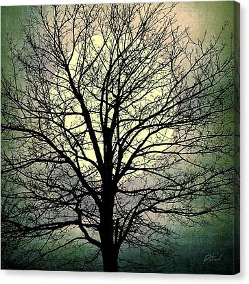 Bare Trees Canvas Print - Winter Moon Silhouette by Patricia Strand