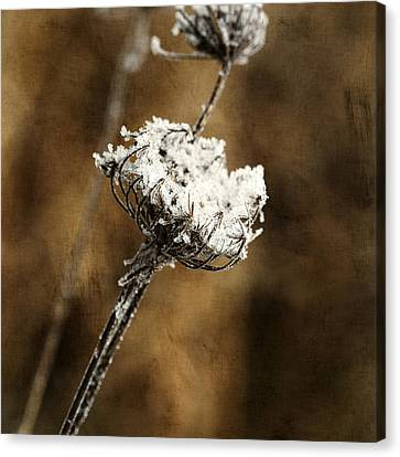 Winter Morning Canvas Print by Bonnie Bruno