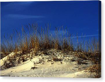 Canvas Print featuring the photograph Winter Morning On The Dunes by Bill Swartwout