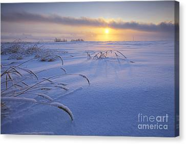 Winter Morning On The Prairie Canvas Print