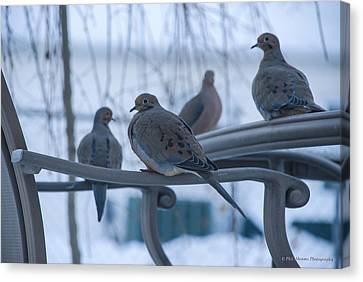Canvas Print featuring the photograph Winter Mourning by Phil Abrams