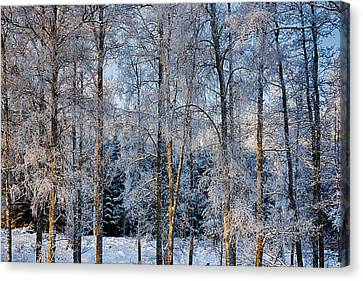 Winter Nature Ans Scenery Canvas Print by Christian Lagereek