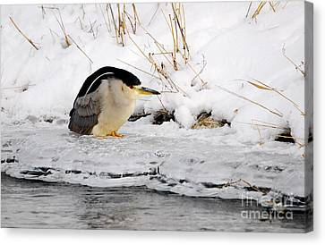 Winter Night Heron Canvas Print by Marty Fancy