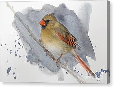 Winter Northern Cardinal Canvas Print by Betty LaRue