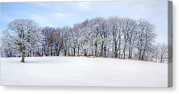 Winter Oak Canvas Print by David Birchall
