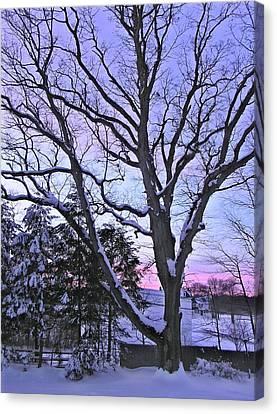 Winter Oak 2 Canvas Print by John Wartman