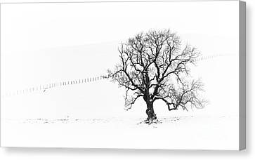 Winter Oak Tree Canvas Print by Tim Gainey