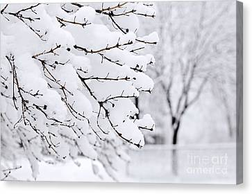 Winter Park Under Heavy Snow Canvas Print by Elena Elisseeva
