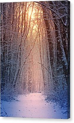 Winter Pathway Canvas Print by Rob Blair