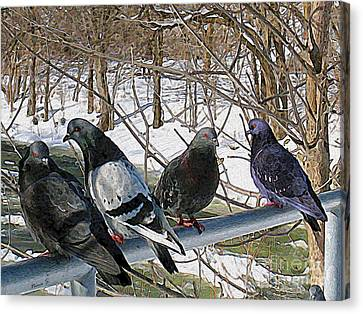 Winter Pigeon Party Canvas Print by Nina Silver