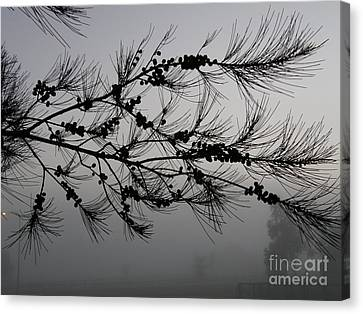 Winter Pine Branch Canvas Print by Bev Conover