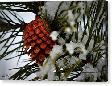 Canvas Print featuring the photograph Winter Pine by Guy Hoffman
