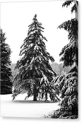 Winter Pines Canvas Print by Ann Horn