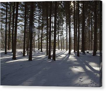Canvas Print featuring the photograph Winter Pines by Daniel Sheldon