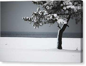 Winter Quiet Canvas Print by Karol Livote