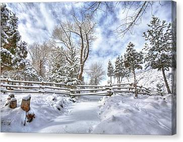 Winter Radiance Canvas Print