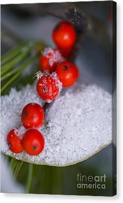 Winter Red Berries Canvas Print by Birgit Tyrrell