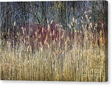 Winter Reeds And Forest Canvas Print by Elena Elisseeva