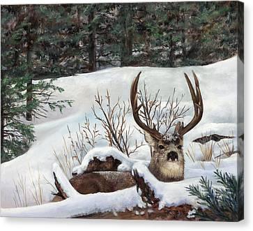 Winter Rest Canvas Print by Karen Cade