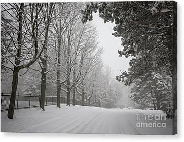 Conditions Canvas Print - Winter Road by Elena Elisseeva