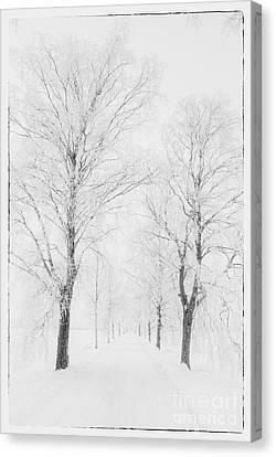 Winter Road Canvas Print by Veikko Suikkanen