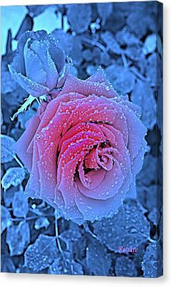 Winter-rose Canvas Print