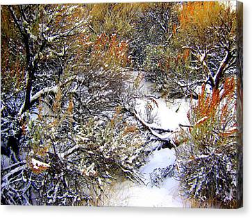 Winter Sage Canvas Print by Kathy Bassett