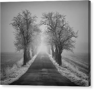 Winter Scene Canvas Print by Jaromir Hron