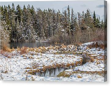 Winter Scene Maine  Canvas Print by Trace Kittrell