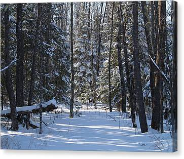 Canvas Print featuring the photograph Winter Scene1 by Susan Crossman Buscho