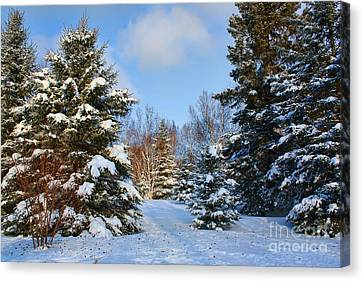 Canvas Print featuring the photograph Winter Scenery by Teresa Zieba