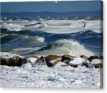 Winter Seascape Canvas Print by Dianne Cowen