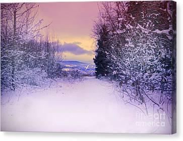 Winter Skies Canvas Print by Tara Turner